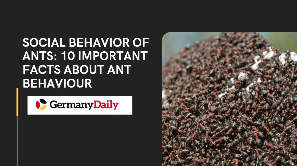 Social Behavior of Ants