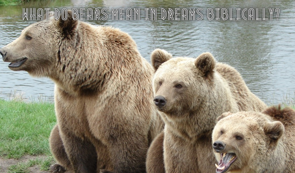 What Do Bears Mean In Dreams Biblically